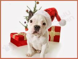 CHRISTMAS CUTE PIT BULL DOG IN SANTA HAT T-SHIRT- MENS WOMEN